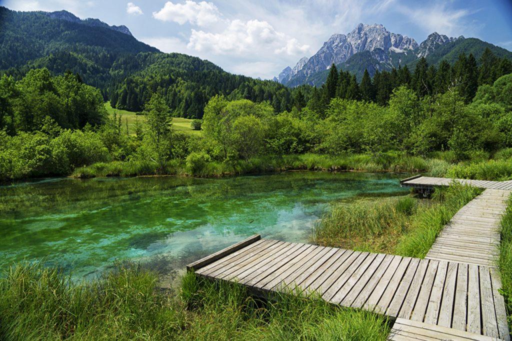 Slovenian forest