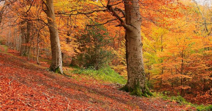 Bosques Espanha